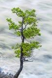 Solo árbol por el agua de río borrosa movimiento Imágenes de archivo libres de regalías
