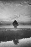 Solo árbol por la costa Fotografía de archivo libre de regalías
