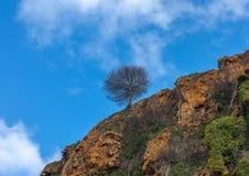 Solo árbol que se coloca en el top de una colina Imágenes de archivo libres de regalías