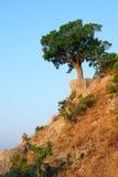 Solo árbol que se coloca en la colina Imagen de archivo