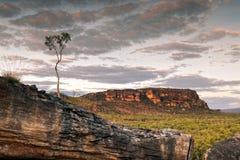 Solo árbol que se coloca en los badlands de Nourlangie en Kakadu P nacional Fotografía de archivo