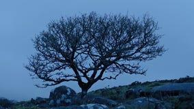 Solo árbol rugoso en la montaña ventosa almacen de video