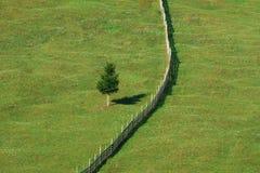 Solo árbol separado por la cerca fotografía de archivo libre de regalías