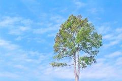 Solo árbol verde en el cielo azul vivo con las nubes en fondo en día de verano fotos de archivo libres de regalías