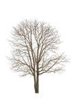 Solo árbol viejo y muerto Fotos de archivo