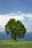 Solo árbol y el mar Fotos de archivo libres de regalías