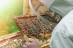 Solo apicultor que sostiene el panal lleno de abejas y de miel Imágenes de archivo libres de regalías