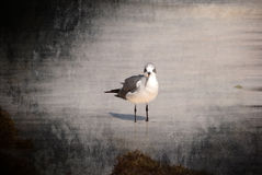 Solo Bird. Lonely bird wading on the beach waiting patiently to be fed some bread Stock Image