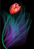 Solo bloem Royalty-vrije Stock Afbeeldingen