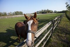 Solo caballo detrás de una cerca de madera Foto de archivo libre de regalías