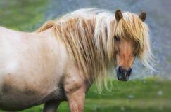 Solo caballo en medow Fotos de archivo