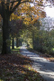 Solo camino Autumn Landscape de la tierra Imagen de archivo