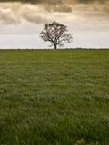 Solo campo del campo del árbol Fotografía de archivo libre de regalías