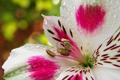 Solo cierre de la flor encima de 2 Imagen de archivo