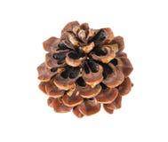 Solo cono del pino, aislado Imagen de archivo libre de regalías