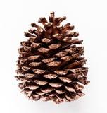 Solo cono pintado de oro del pino aislado en el fondo blanco foto de archivo libre de regalías