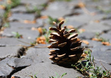 Solo cono seco marrón que pone en el piso de la calle fotos de archivo libres de regalías