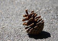 Solo cono seco marrón que pone en el piso de la calle Fotografía de archivo libre de regalías