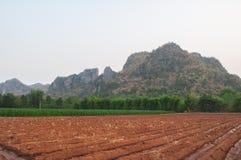 Solo cultivado do campo da terra - paisagem da agricultura Fotografia de Stock