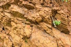 Solo de argila alaranjado Fotografia de Stock