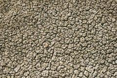 Solo de argila Textured Fotografia de Stock