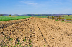 Solo de Brown de um campo agricultural Imagem de Stock