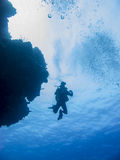 Solo diver from below. Solo scuba diver beside coral head shot from below Stock Photo