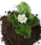 Solo e flor Imagem de Stock
