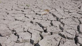 Solo fraturado seco da seca na parte inferior do lago, do rio ou de mar vídeos de arquivo