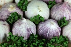 Solo garlic Stock Images