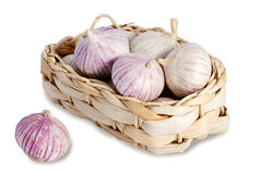 Solo garlic Stock Image