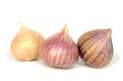 Solo garlic Royalty Free Stock Photo