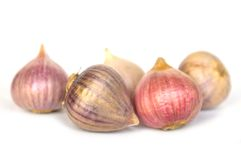Solo garlic Stock Photo