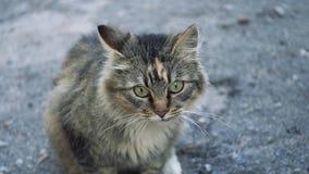 Solo gato sin hogar adulto almacen de metraje de vídeo