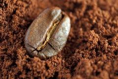 Solo grano de café Imágenes de archivo libres de regalías