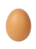 Solo huevo Foto de archivo libre de regalías