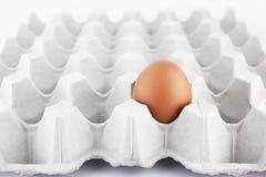 Solo huevo en la bandeja Imagenes de archivo