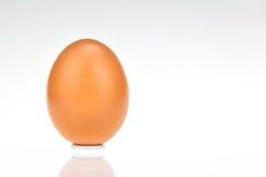 Solo huevo marrón del pollo Foto de archivo libre de regalías