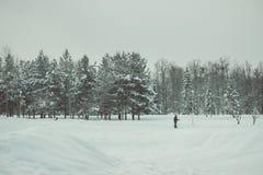 Solo im winterland Stockfotografie