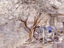 solo izquierdo del burro Fotografía de archivo