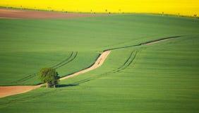 Solo manzano en prado verde Foto de archivo