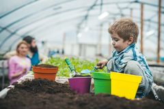 Solo natural solo natural rico para jardinar trabalho pequeno do fazendeiro do menino na estufa com solo natural Solo natural imagem de stock royalty free
