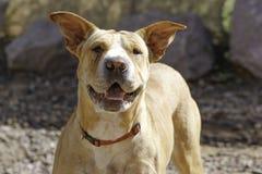 Solo perro feliz de la mezcla del sharpie fotografía de archivo libre de regalías