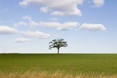 Solo árbol en horizonte Foto de archivo libre de regalías