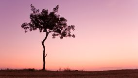 Solo árbol sobre el cielo de la puesta del sol Foto de archivo libre de regalías