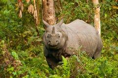 Rinoceronte dentro del bosque Fotos de archivo libres de regalías
