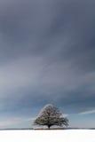 Árbol grande del invierno Imagen de archivo