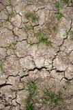Solo seco e grama Fotografia de Stock Royalty Free