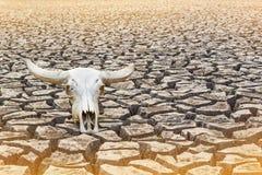 Solo seco, rachado Imagem de Stock