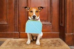 Solo sinistro del cane fotografia stock